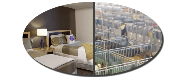 See Special NFR Room Rates